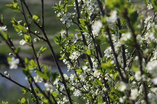 spring-179537_640